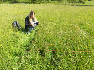 Conservation work in Primley Meadow