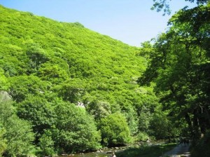 2017 08 WWCT Tracey sorbus blog 2 Watersmeet on Exmoor, Devon