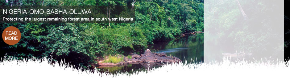 Protecting the largest remaining forest area in south west Nigeria